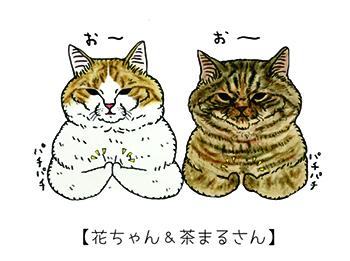 花ちゃんと茶まるさん(世にも不思議な猫世界)