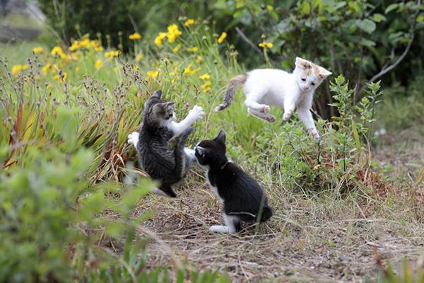 飛び猫 「旅する飛び猫」