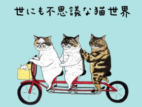 KORIRI インタビュー 世にも不思議な猫世界